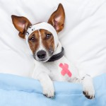 dog-in-hospital